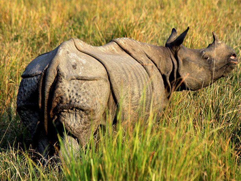 Bandhavgarh National Park and Tiger Reserve in Madhya