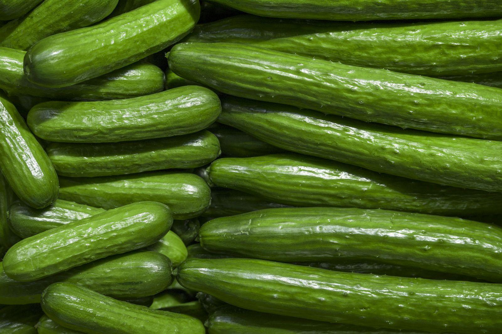 تفسير رؤية الخيار في الحلم أو المنام الحلم بالخيار الخيار الخيار الأصفر الخيار المخلل Cucumber Health Benefits Cucumber Cucumber Benefits