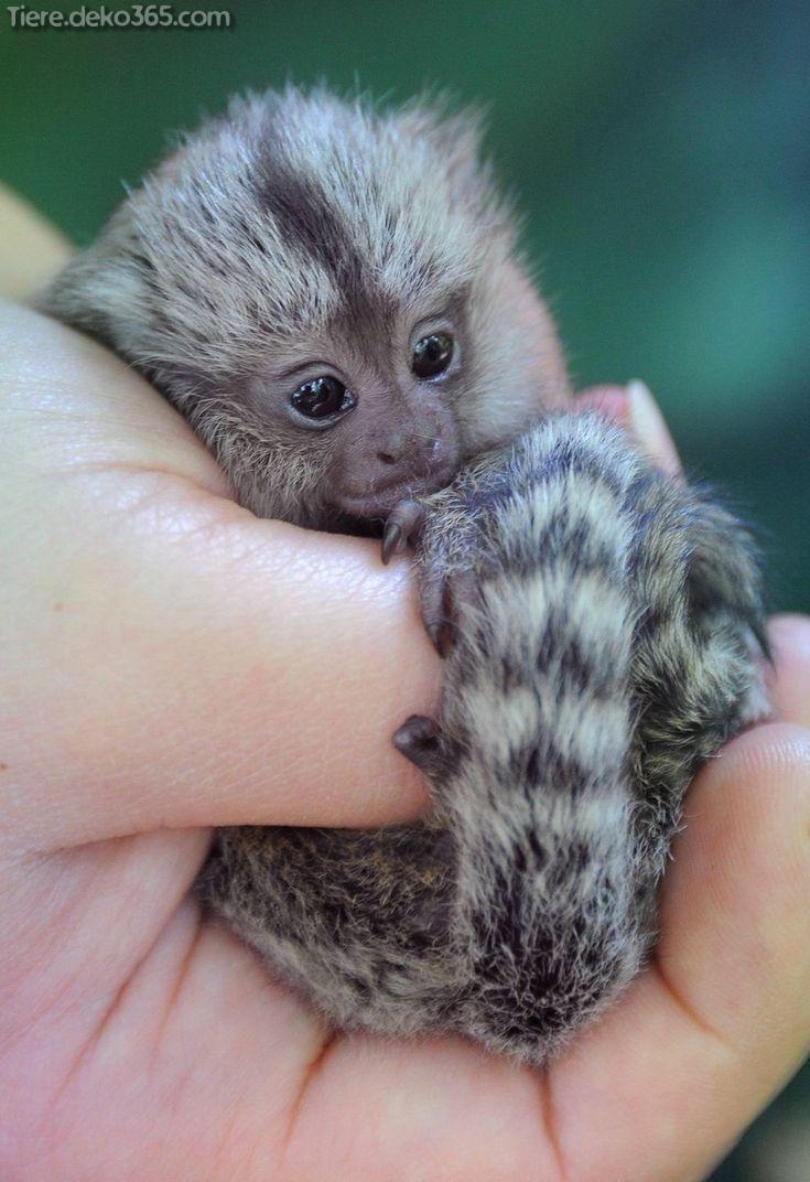Tolle entzückende kleine Tiere, die in Ihrer Handfläche halten #cutecreatures