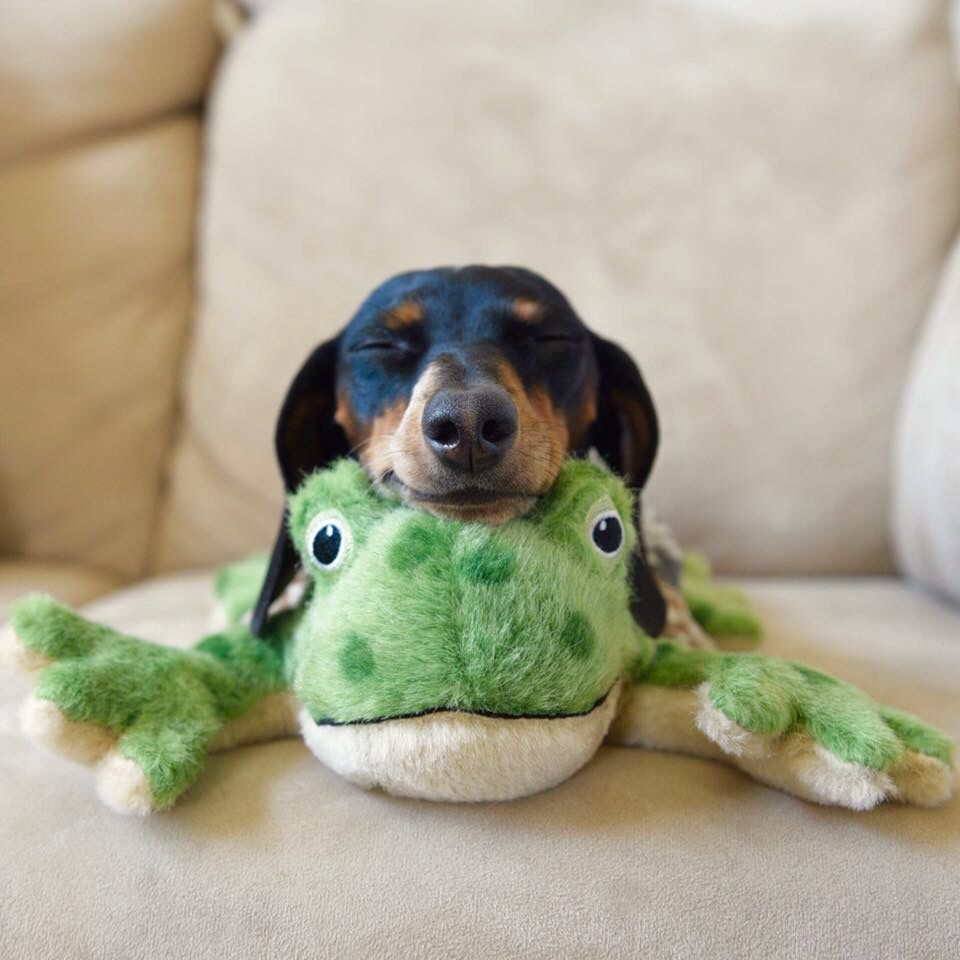 Animals likewise Crochet Whale additionally 147070744064956970 besides Easter Bunny Or Dachshund further Interesting. on weiner dog easter bunny