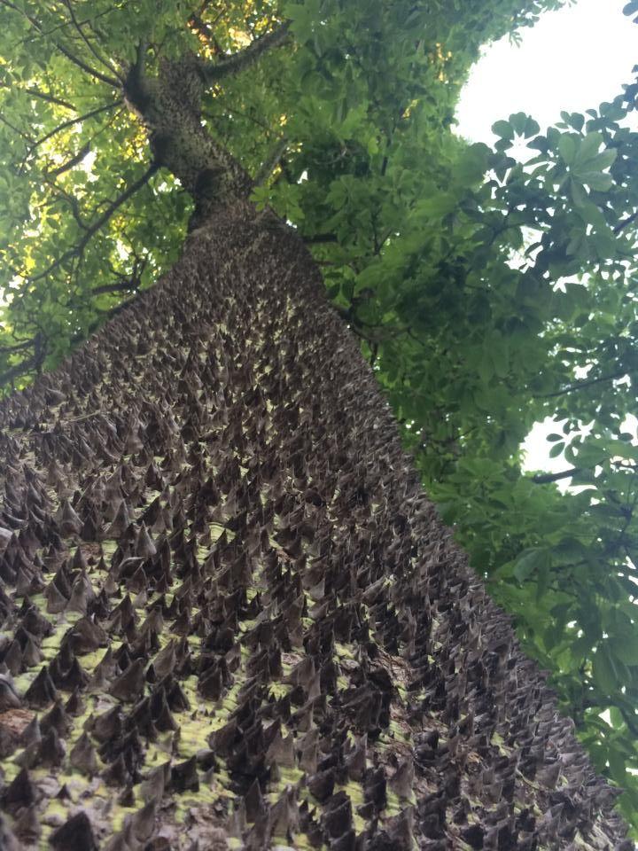 değişik ağaçlar..!(?)