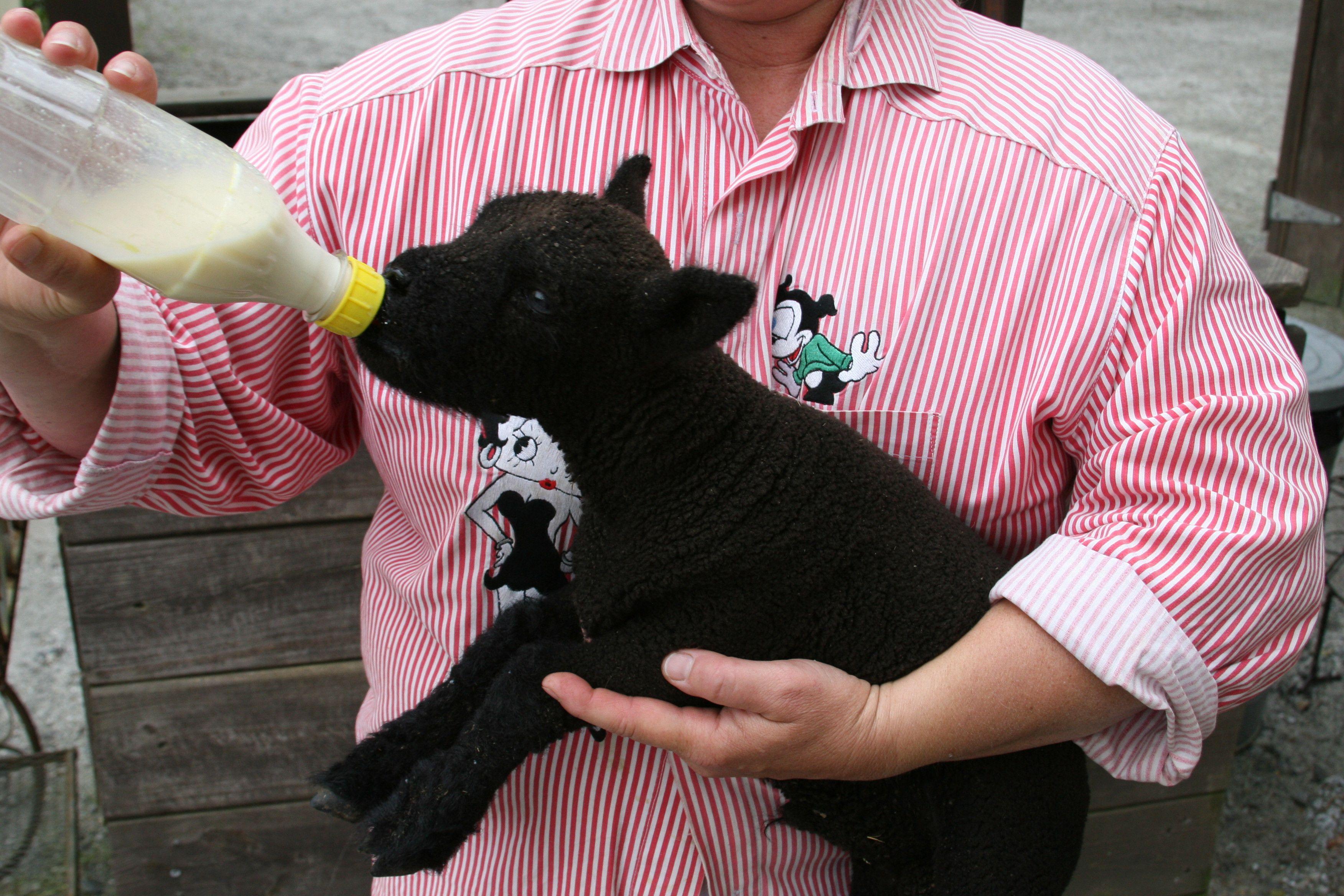 Tanglewood Farm Miniature Animals Canton GA