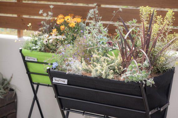 省スペースで機能的 おしゃれなカラフルプランターで家庭菜園を始め