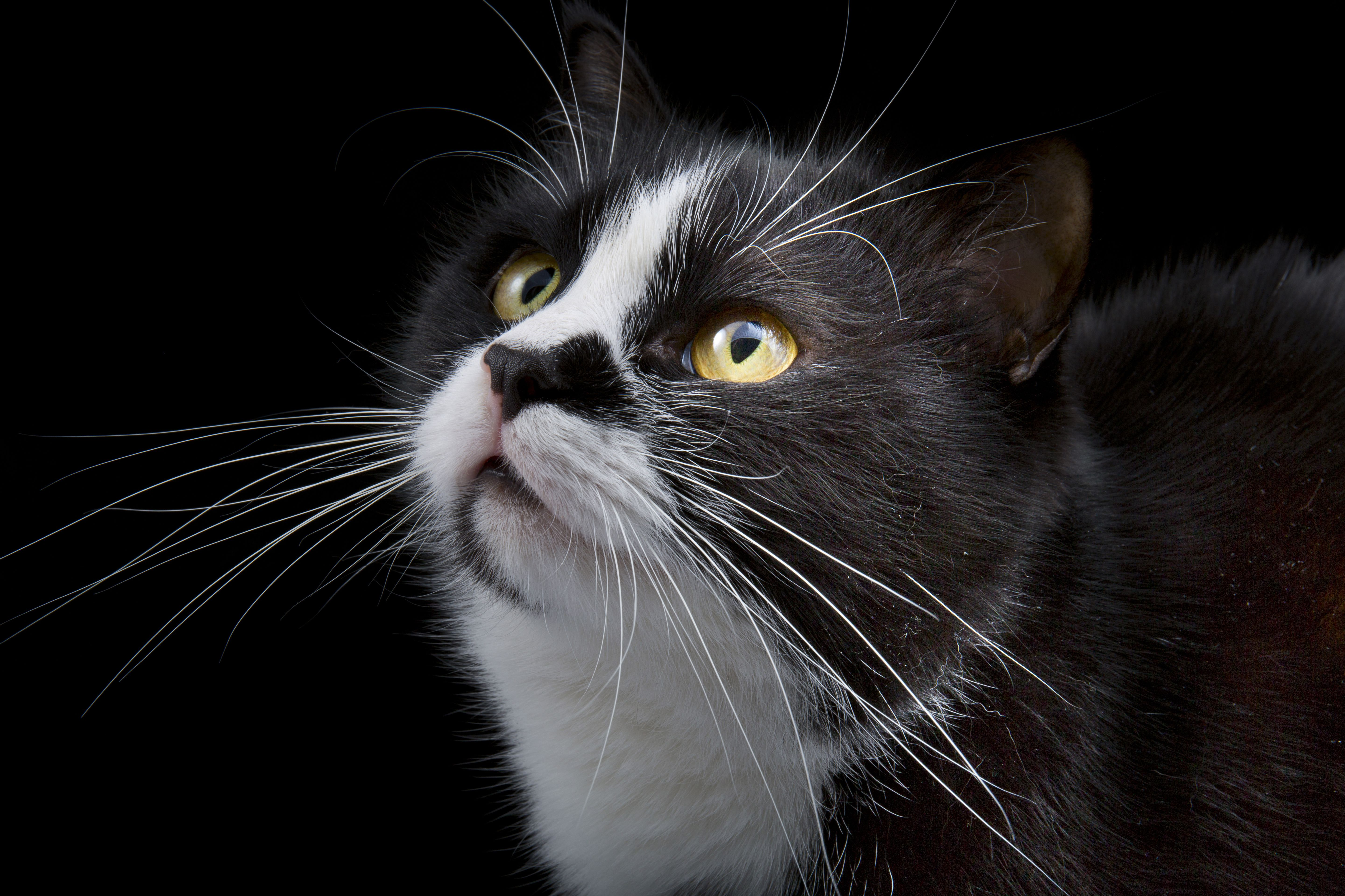 Everything You Need to Know About Cat Whiskers Cat