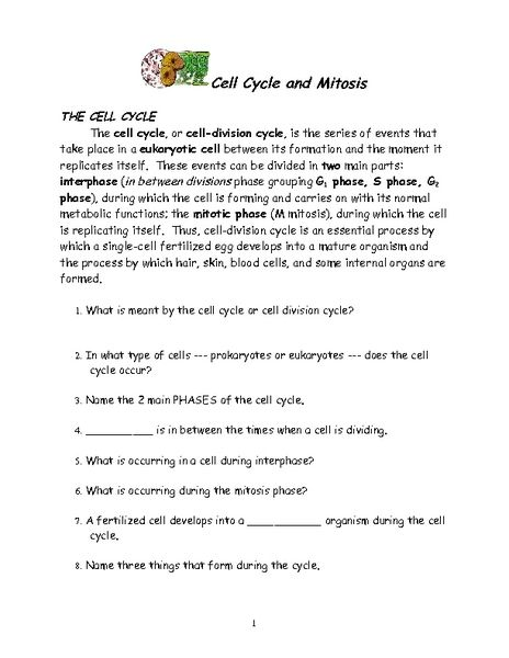 Cell Cycle and Mitosis Worksheet | Lesson Planet | School Work ...