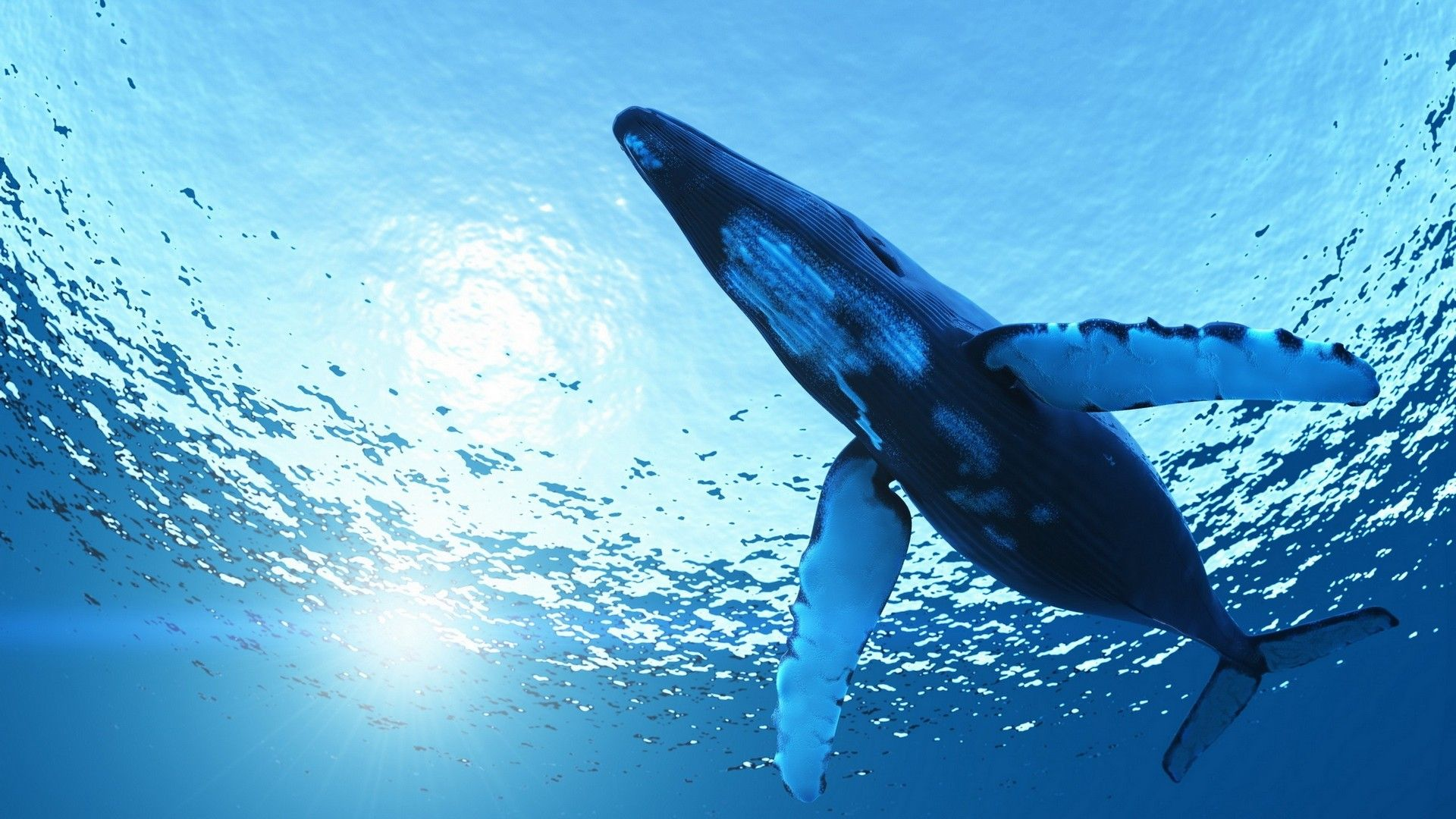 killer whale wallpaper - Android Apps on Google Play