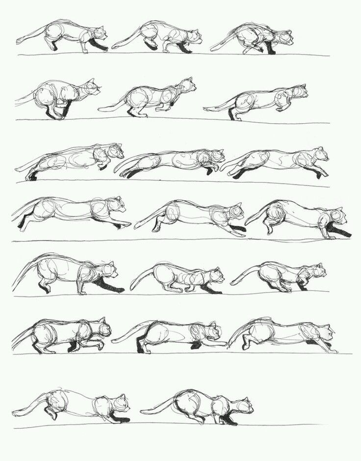 Pin by Lena on Animals drawing | Pinterest | Cat, Animation and Sketches