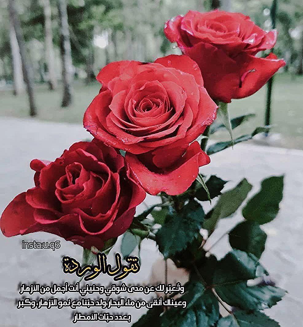 تقول الوردة وتعبر لك عن مدى شوقي وحنيني أنت أجمل من الأزهار وعيناك أنقى من ماء البحار ولد حبنا مع نمو الأزهار وكبر مشاهير فنان فنانة Flowers Rose Plants