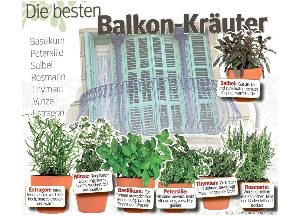 Balkon Kräuter | Kräuterkunde/herbalism | Pinterest Krauter Balkon Pflanzen