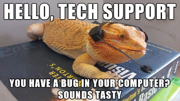 30 Bearded Dragon Memes To Make You Smile Bearded Dragon Cute Baby Bearded Dragon Funny Lizards