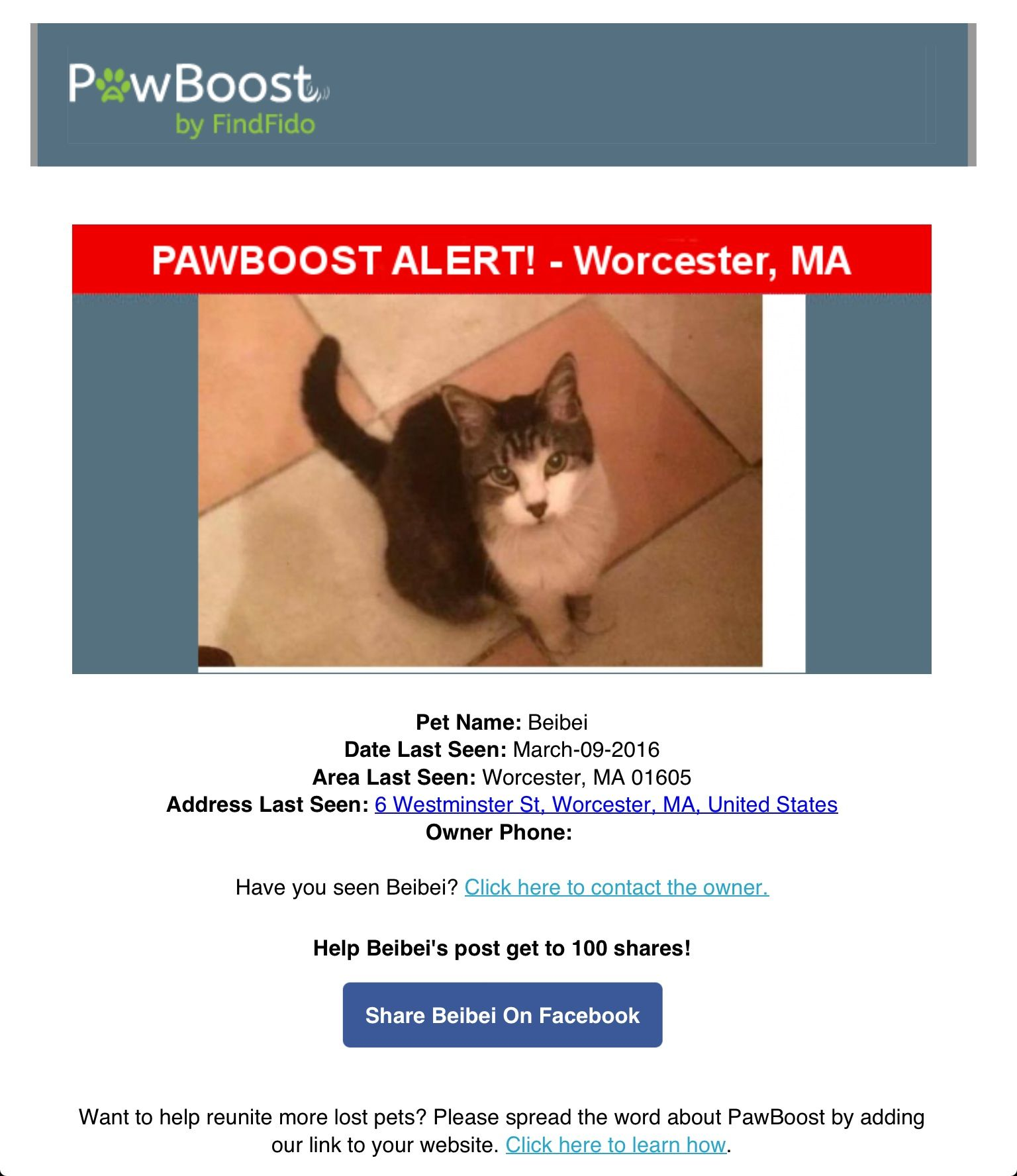 Lost Cat Named Beibei Worcester Ma Pet Names Cat Names Pets