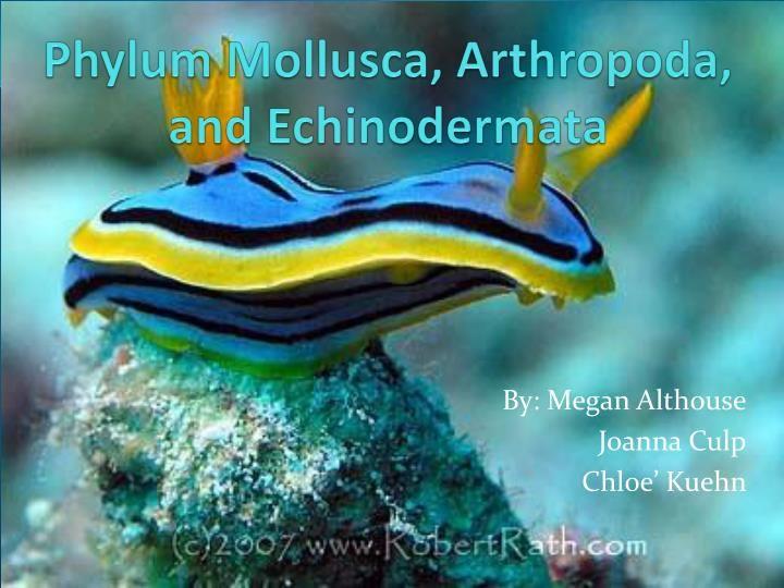 1000+ images about Phylum Arthropoda on Pinterest | Mantis ...  |Phylum Arthropoda Marine