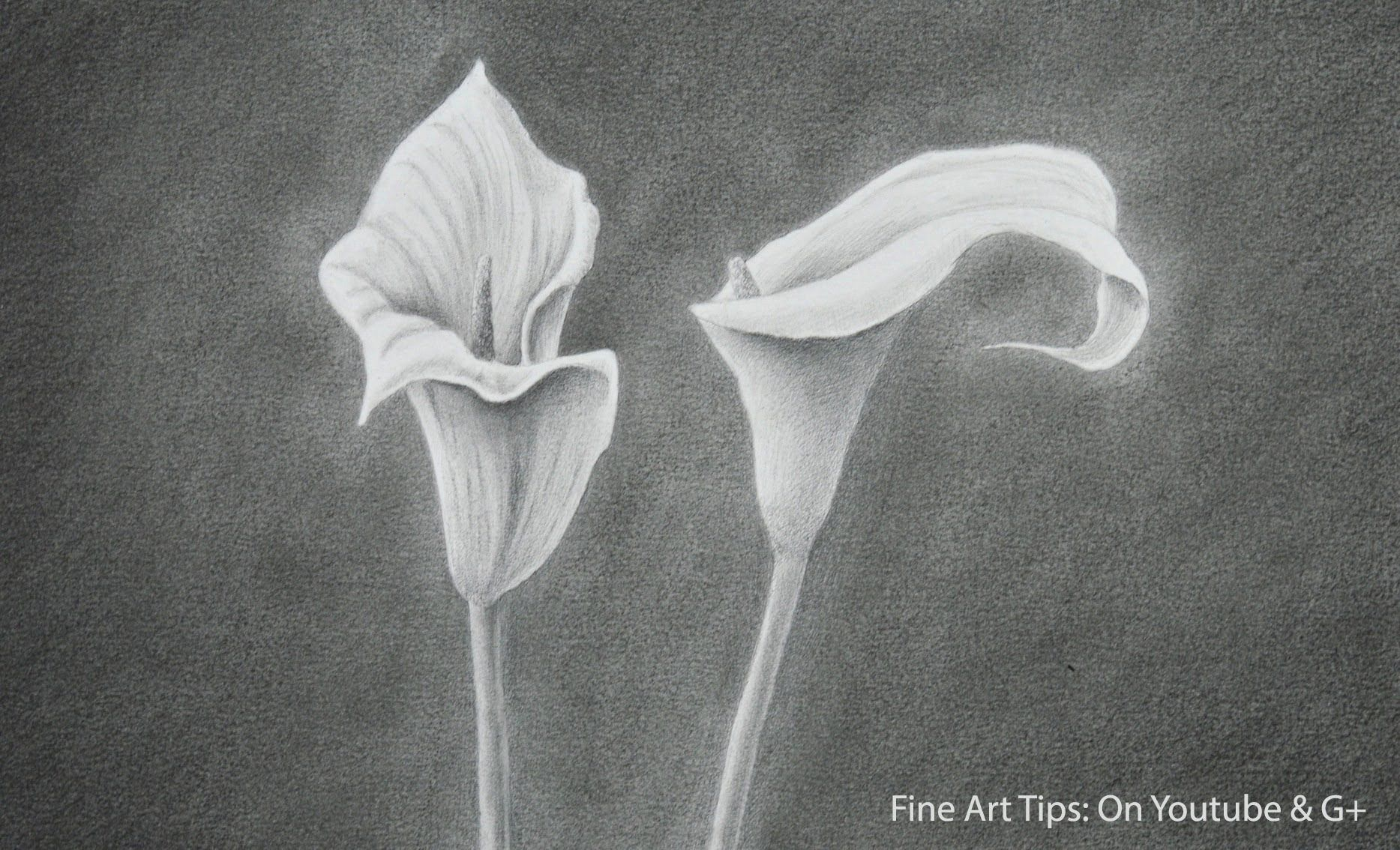 How to Draw a Calla Lily How to Draw Flowers Flower