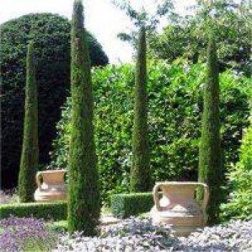 Pair of Van Gogh Tuscan Totem Pole Cypress Trees - Cupressus ...