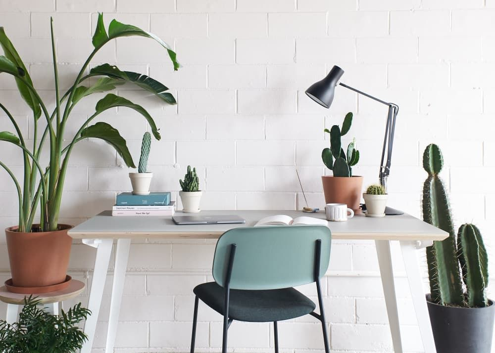 Bloomscape Just Dropped a New Line of Cacti That Will Bring the Desert to Your Desk -   17 planting Indoor desk ideas