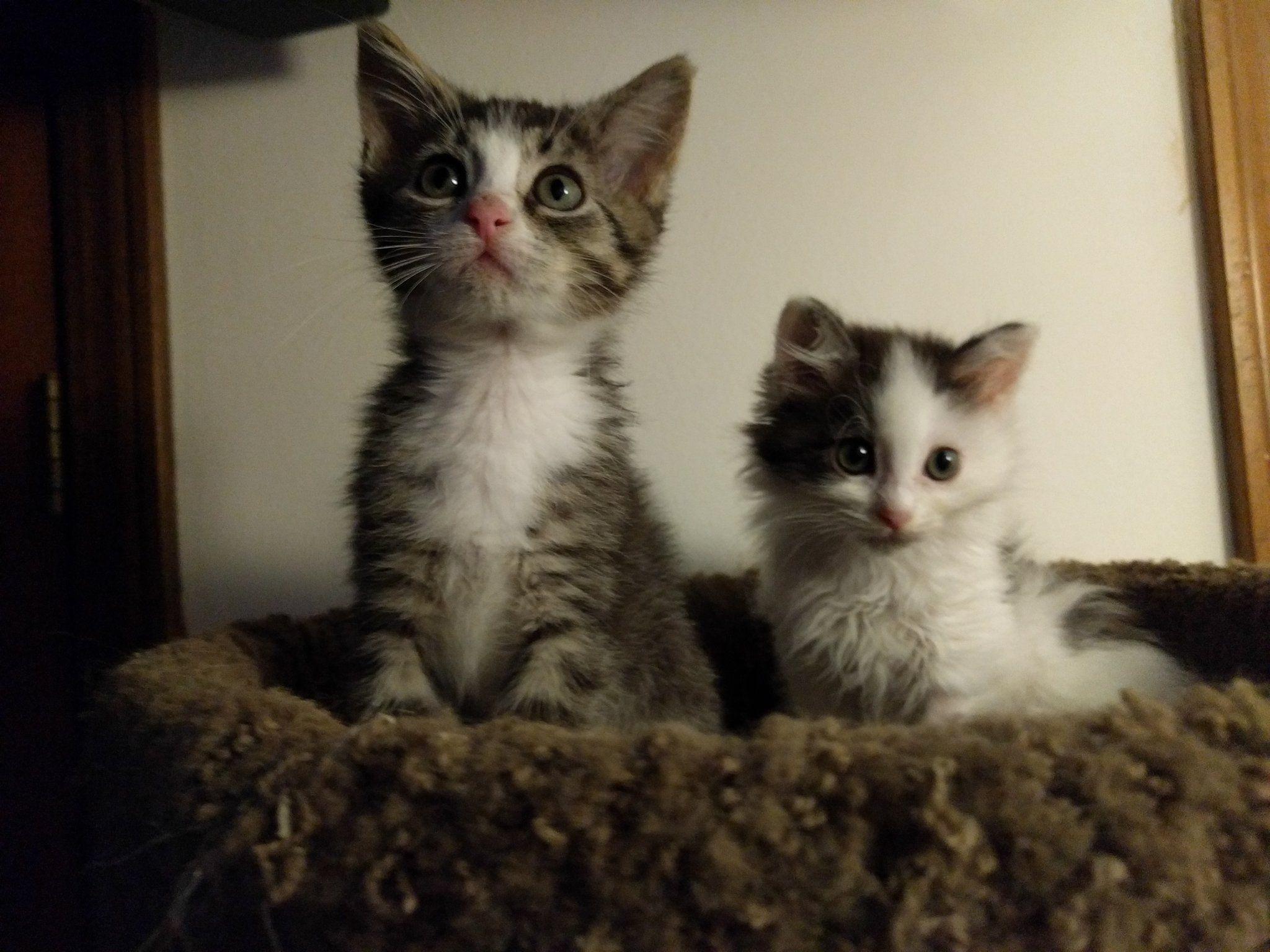 Elderberry And Eucalyptus Online Adoption Form Kitten Academy Kitten Academy Twitter Kitten Cat Mom Cute Animals