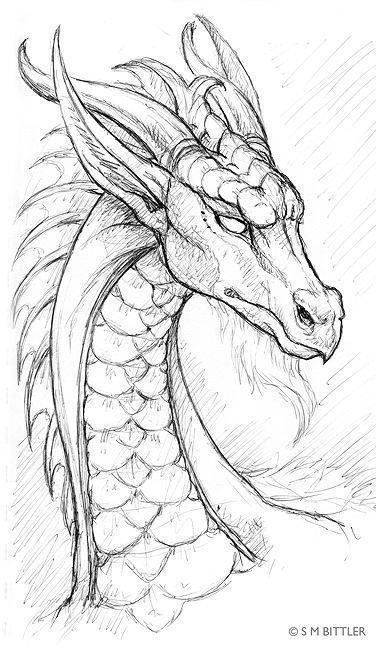 Черно белый эскиз тату с цветами: Черно-белый эскиз дракона