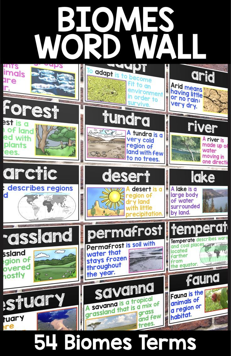 Every Vocabulary Term You Can Think Of For Your Biomes And Ecosystems Word Wall There Are 4 Different Versions Incl Vocabulary Word Walls Word Wall Ecosystems [ 913 x 1219 Pixel ]