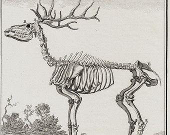Deer Skeleton Anatomy Diagram - Complete Wiring Diagrams •