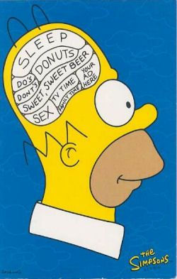 Striking Differences Between Brains Of Men And Women Scienceagogo Homer Simpson Brain The Simpsons Homer Brain