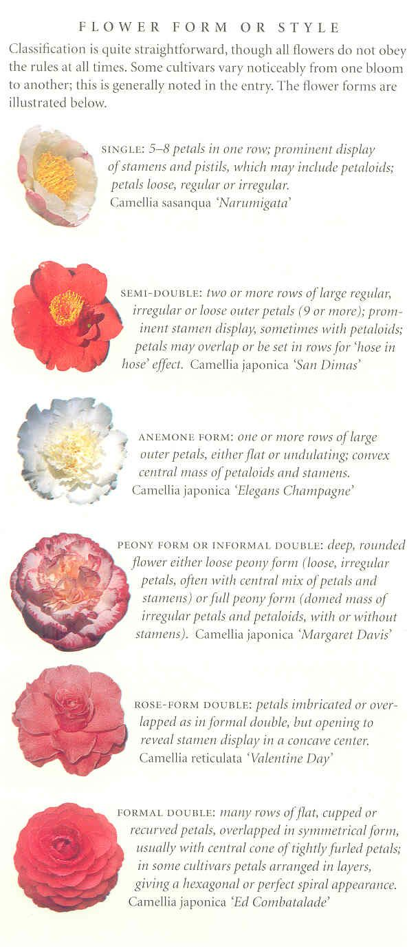 These Images And Descriptions Of The Different Camellia Forms Can Help You In Identifying Your Blooms Camellia Flower Camellia Trees To Plant