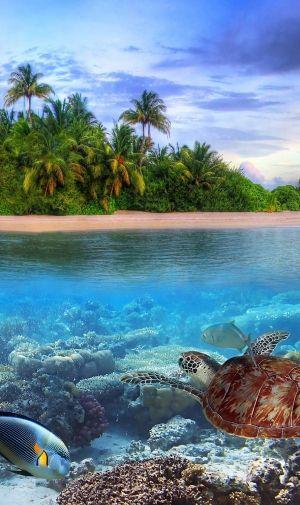海 海亀と熱帯魚のiPhone壁紙