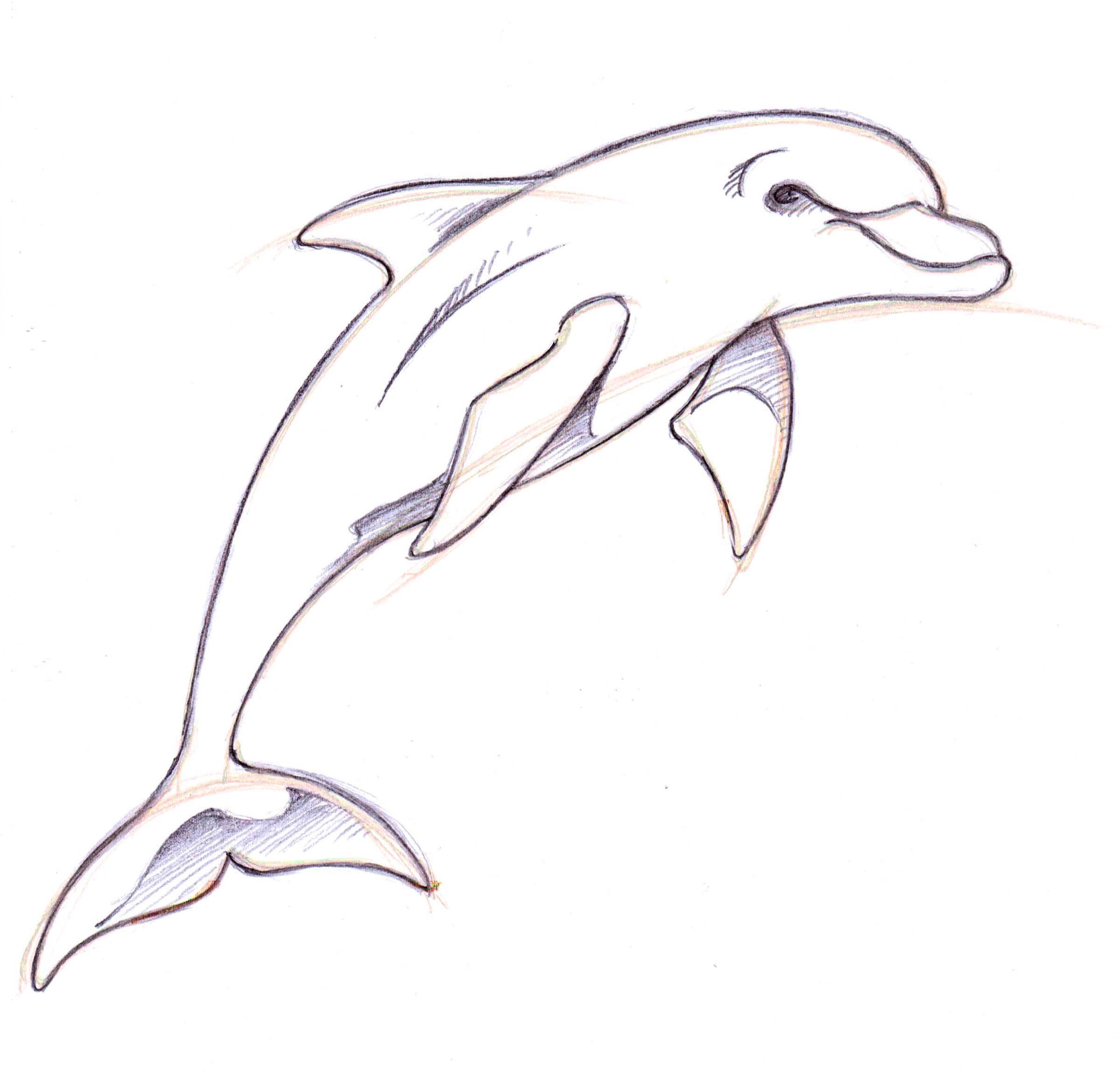 How to Draw a Dolphin Step By Step | Vorlagen | Pinterest | Zeichnen ...