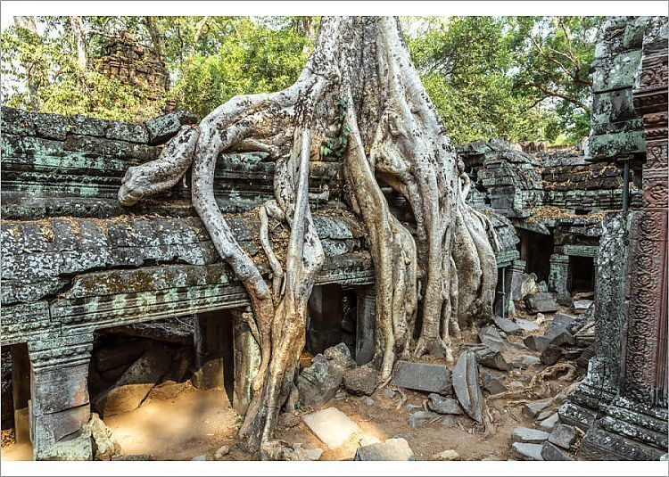 Print of Old temple ruins with giant tree roots, Angkor