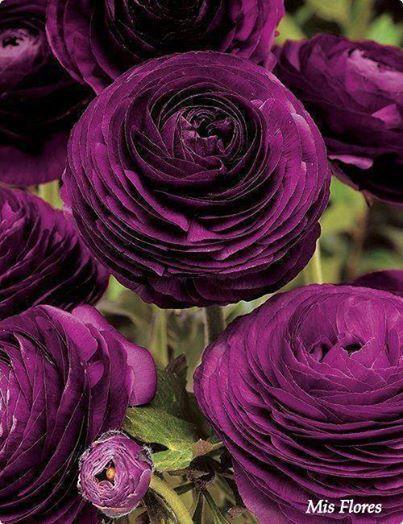 (1) Pretty flowers