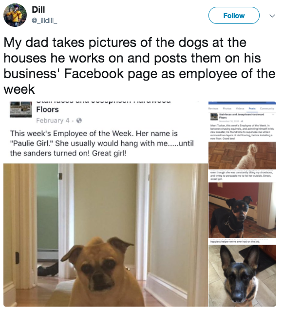 18 Of The Daddest Dads On The Entire Planet Funny Dog Photos Funny Dogs Dog Photos