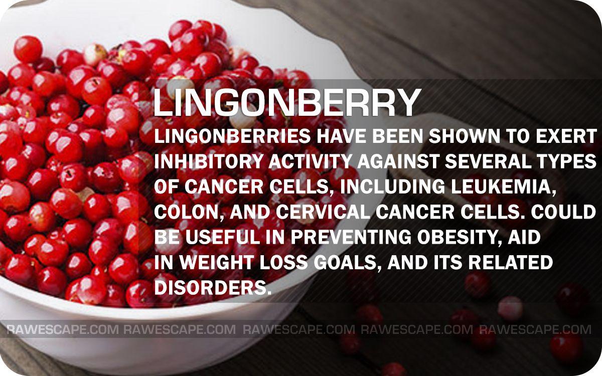 Health benefits of lingonberries