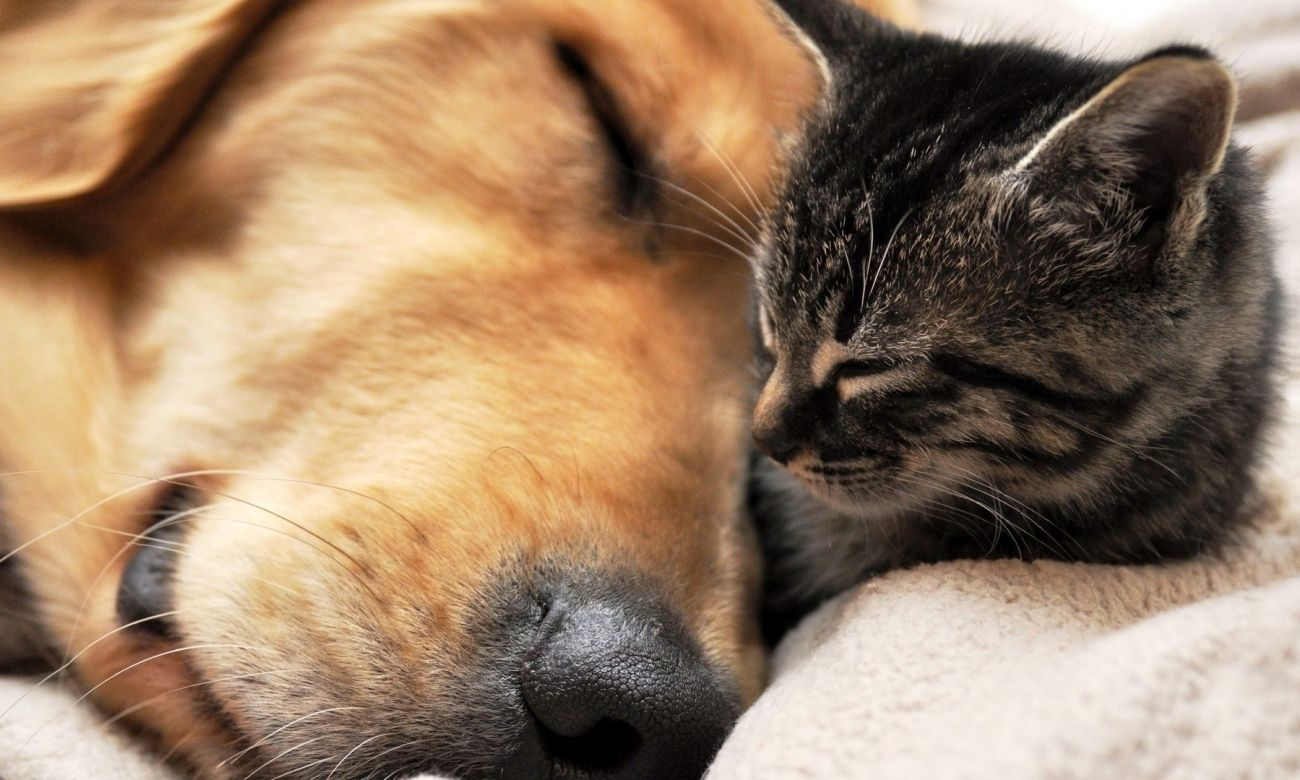Download Ree Download Cat And Dog Wallpaper High Quality Hd Wallpaper In 2k 4k 5k 8k 10k Resolution For Your Desktop M Cute Cats And Dogs Sleeping Dogs Dog Cat
