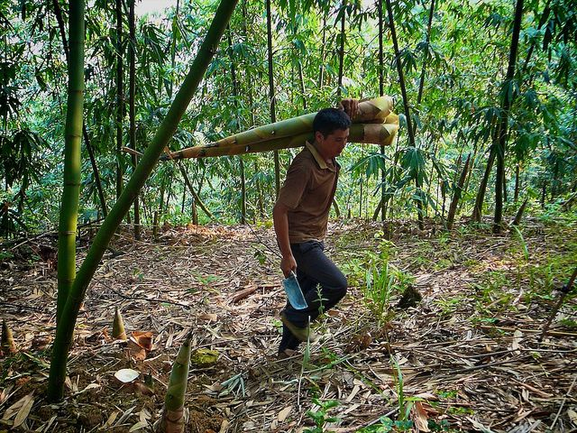 Bamboo Regeneration Efforts Initiated In Chhattisgarh By The Forest Department