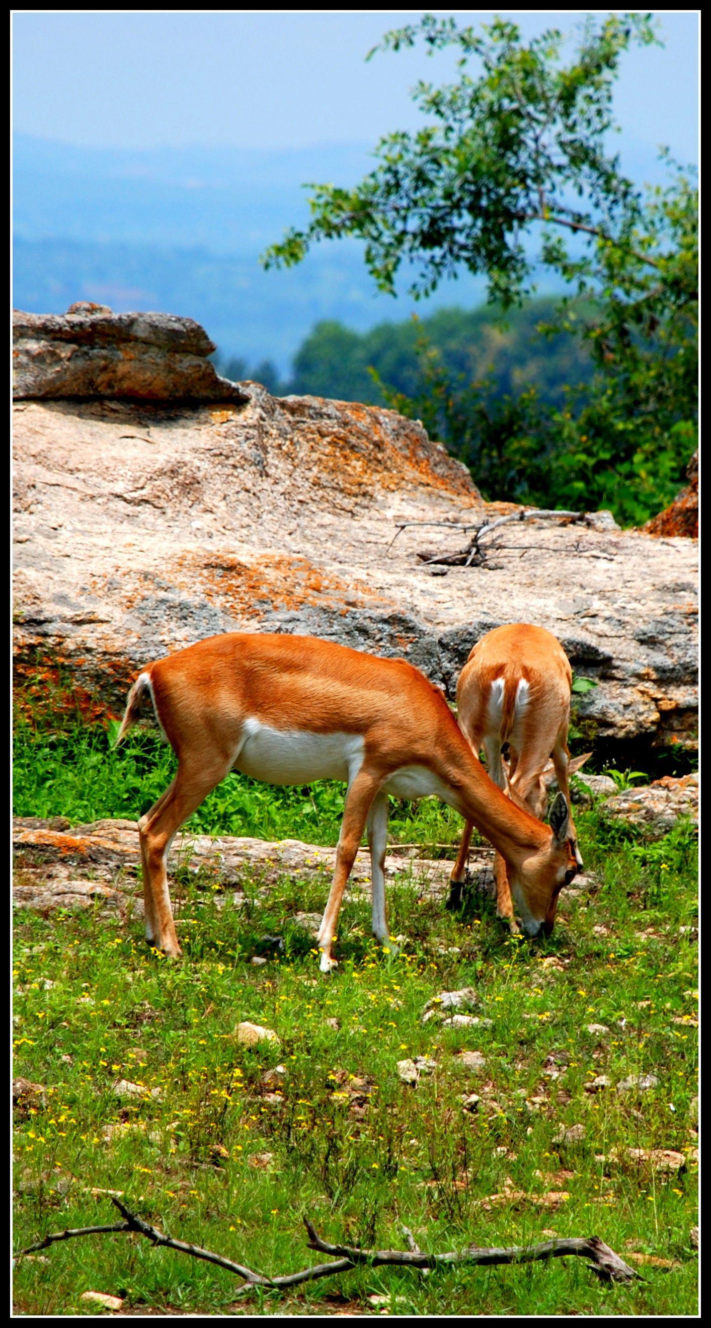 Bangalore Animals, Nature, Wild