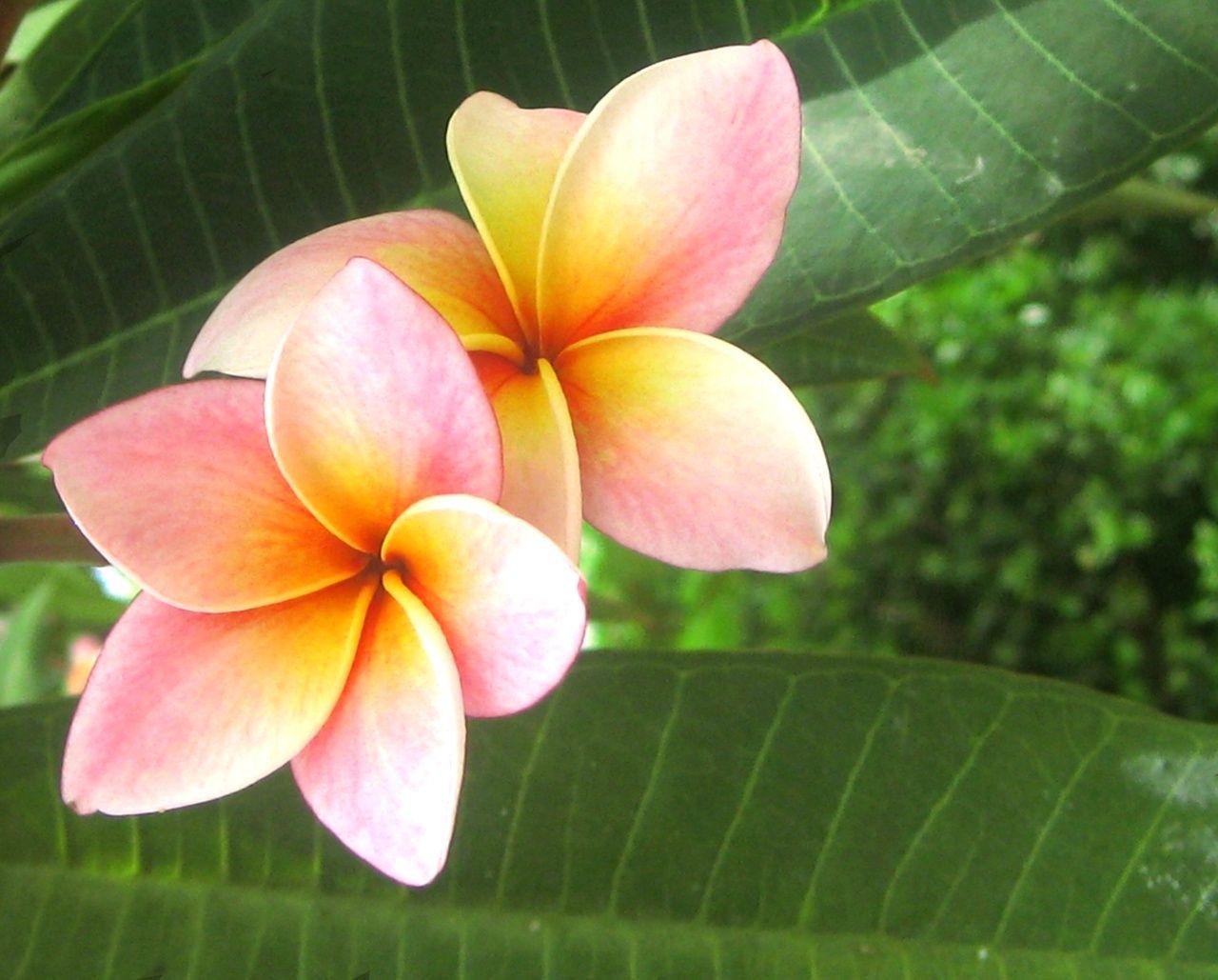 Exotic Flowers exotic flowers JPG jboggie Pinterest
