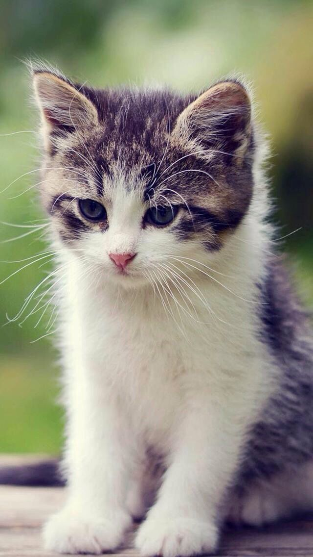 Chat Bebes Animaux Animaux