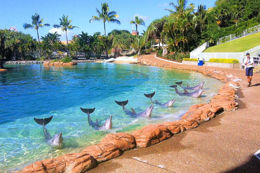 Dear Sea World It S Time To Empty The Tanks Action For Dolphins Resort Water Park Sea World Australia Tourism