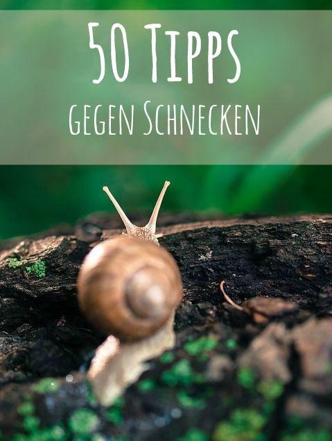 schnecke mein garten Pinterest Schnecke, Gärten und Pflanzen - schrebergarten gestalten tipps