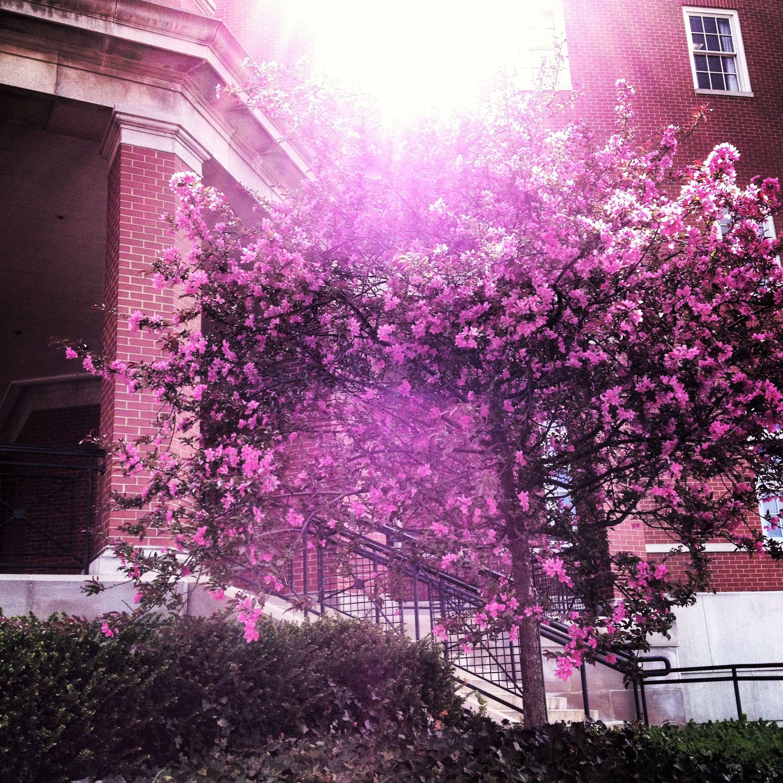 Spring Athens Ohio University Bentley Annex Athens Ohio Ohio University Ohio University Athens