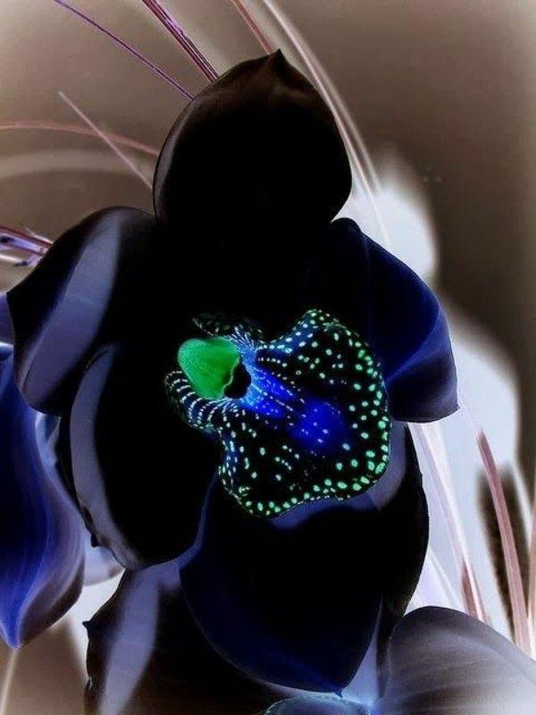 Flowers Orchids Beautiful Black Orchid Cicek Yaprak Orchids