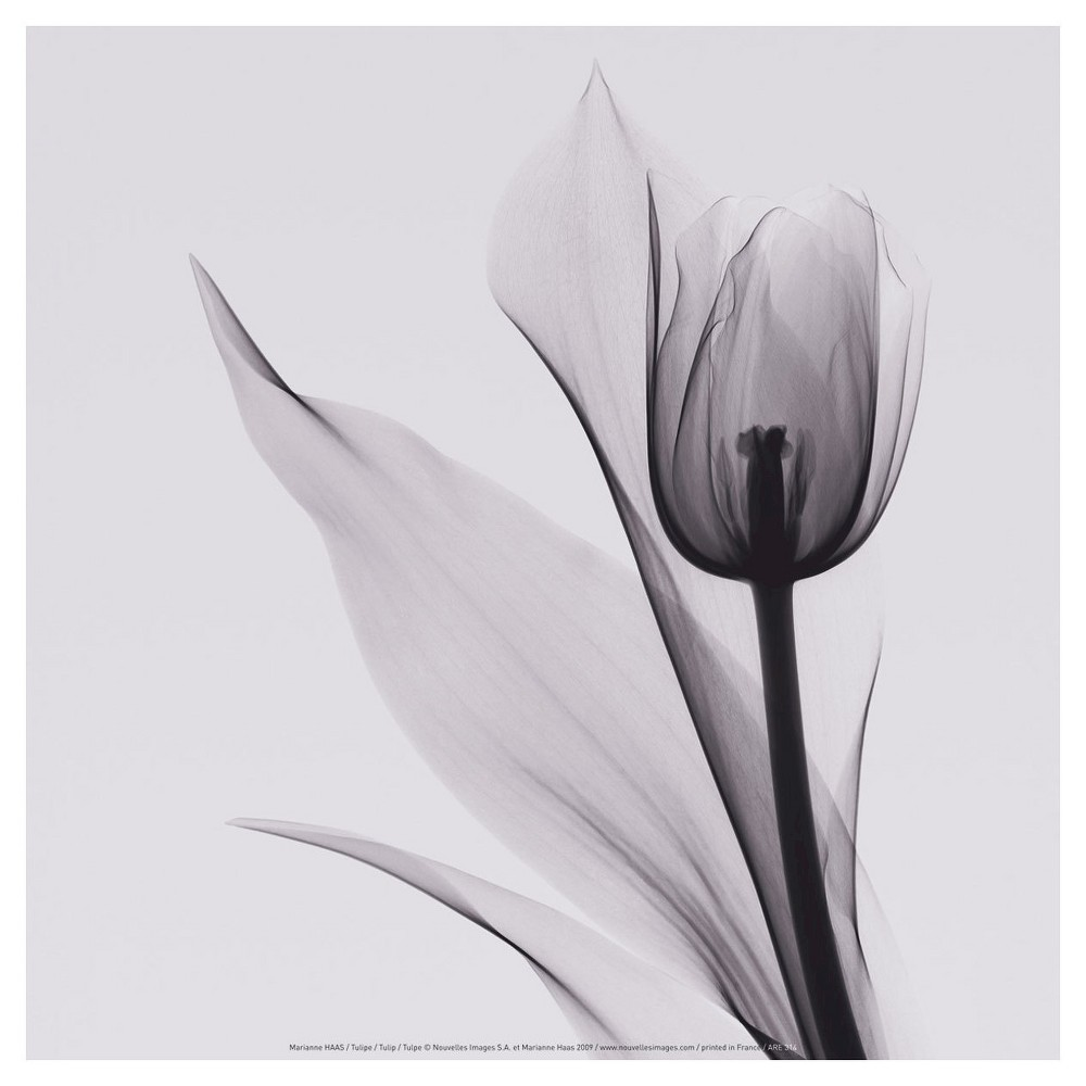 Art.com Tulip by Marianne Haas - Art Print, Violet Lily