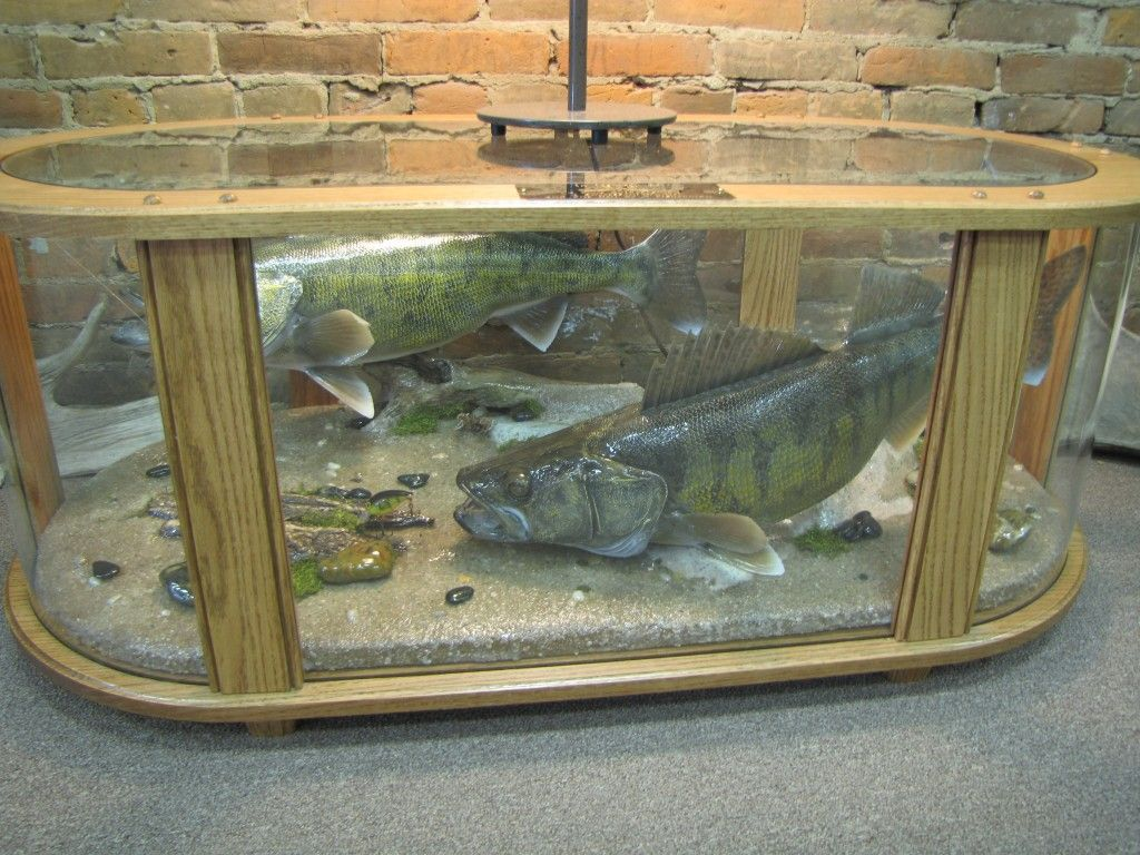 Taxedermy table coffee table fish mount display table for Mount this fish company