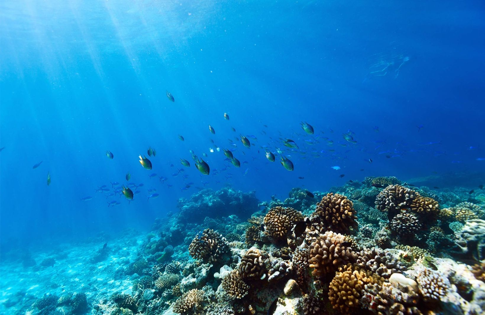 Diving Coral Fish Wall Mural Underwater wallpaper, Ocean