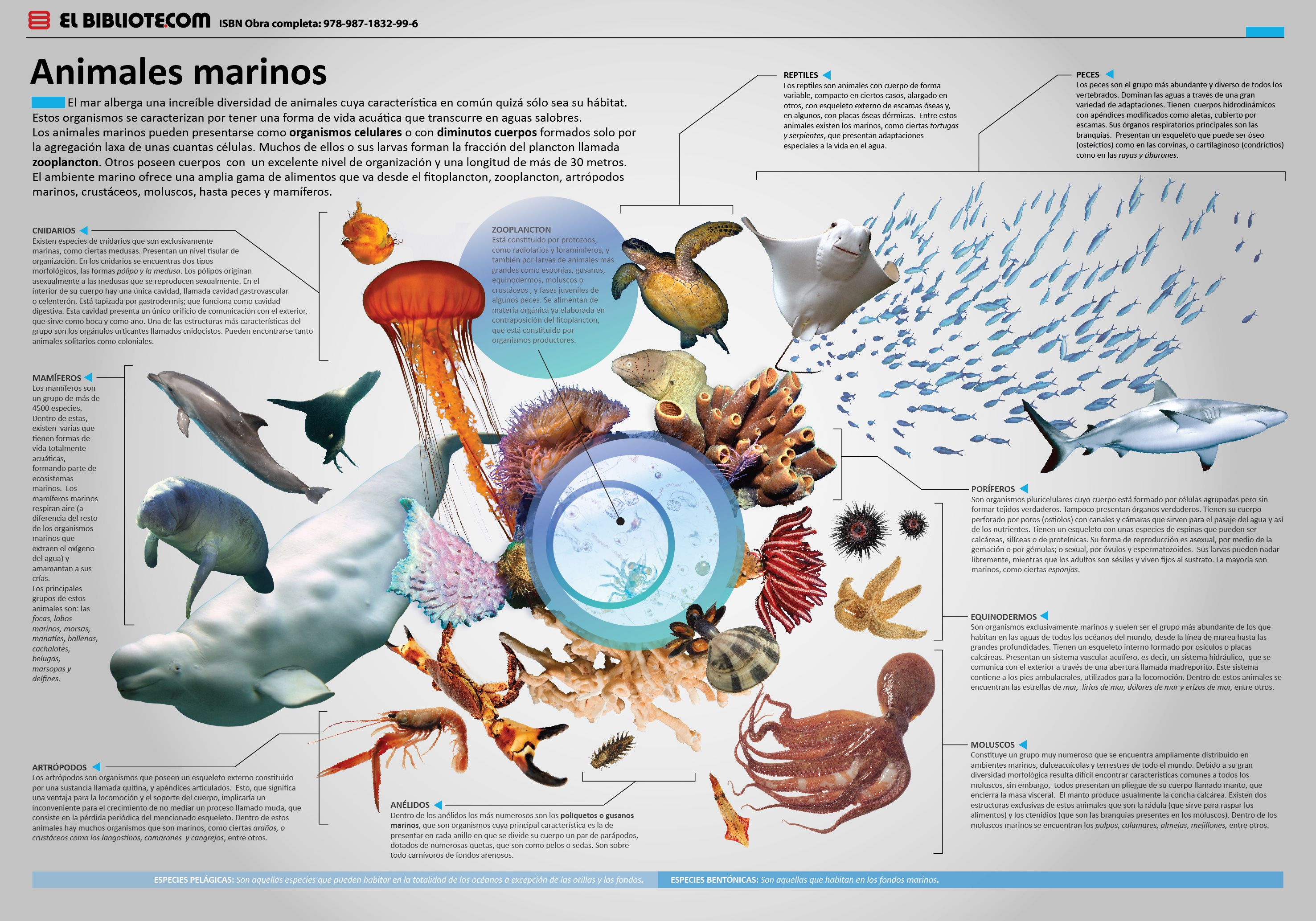 Pin By виктор пономаренко On Ciencia Naturaleza Y Tecnología Animal Posters Placemat Design Animals