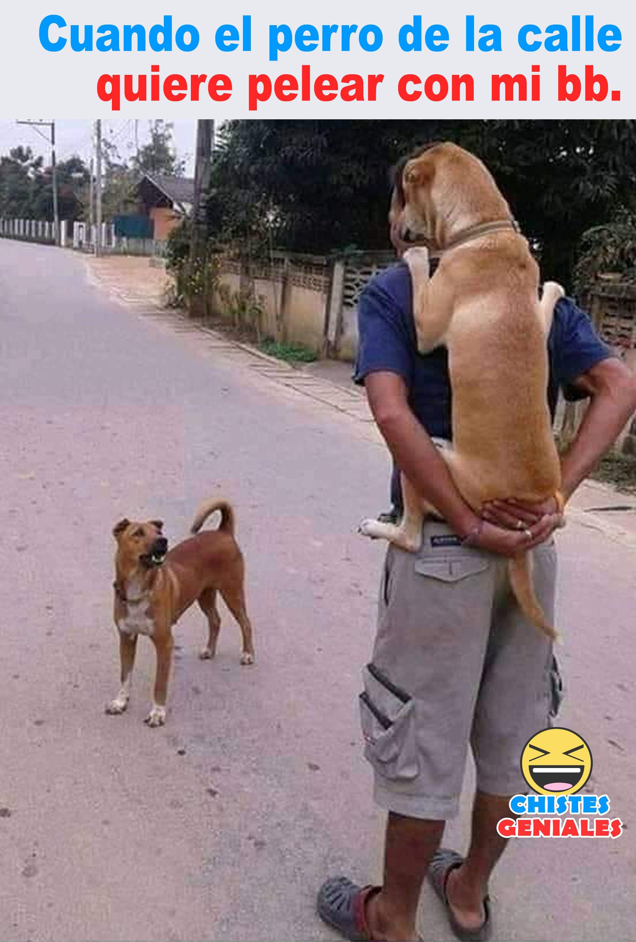 Cuando El Perro De La Calle Quiere Pelear Con Mi Bb Humor De Perros Perros De La Calle Imagenes De Perros Graciosos