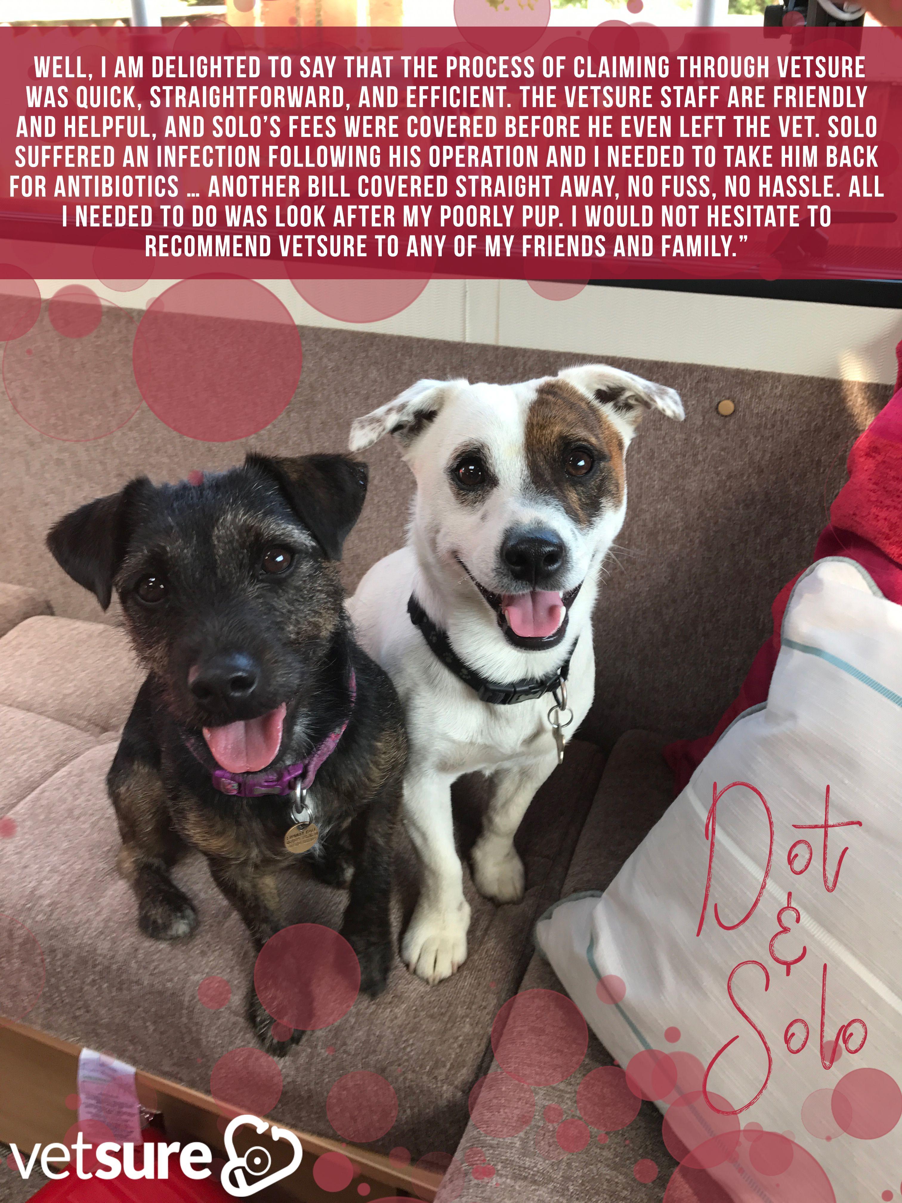 solo dot pair jackrussellterrier petinsurance puppy