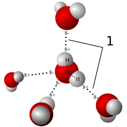 model of hydrogen bonds 1 between molecules of water