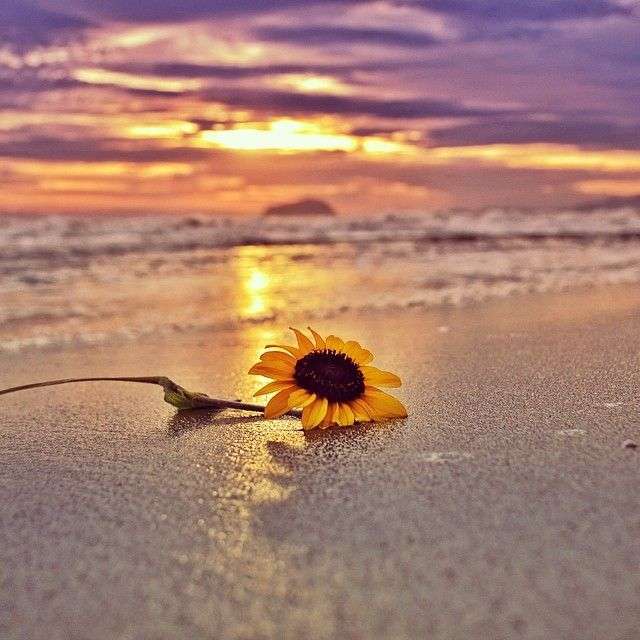 Unggul Santosa On Instagram Have A Nice Day Rodrigorenner Sunflower Pictures Sunflower Photography Sunflower