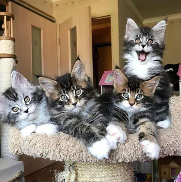 Funny Pictures June 3 2019 In 2020 Cute Cats Photos Cute Cats Beautiful Cats