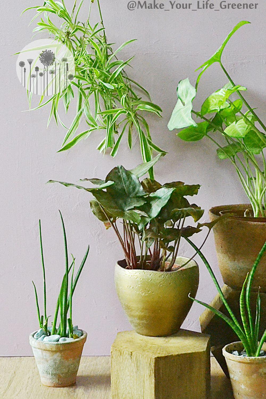 10 Roslin Na Polnocny Parapet Rosliny Do Ciemnych Pomieszczen Plants Potted Plants Garden